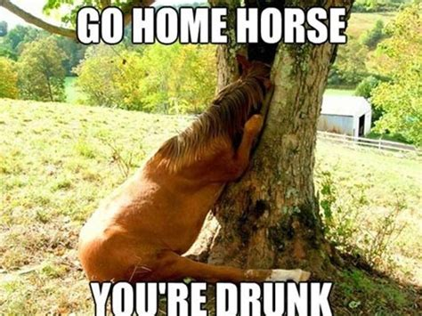Funny Horse Memes - funny drunk animals with captions