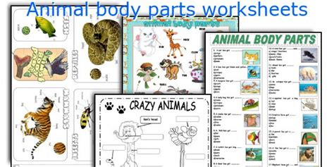 printable animal body parts english teaching worksheets animal body parts