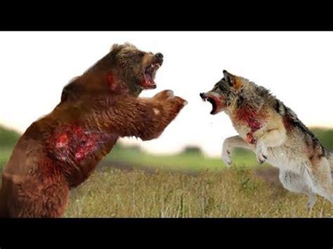 161 top 10 ataques de animales a personas imagenes fuertes top 10 ataques de osos lobos personas perros bisontes