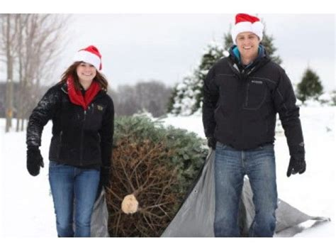 where to cut your own christmas trees in the chicago
