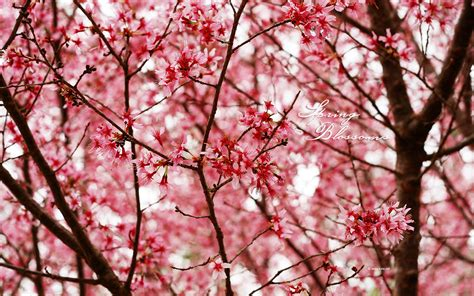 wallpaper tumblr spring spring wallpapers by kate net