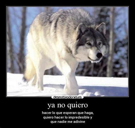 imagenes lobo blanco lobo blanco enojado imagui