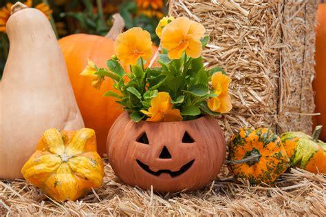 Pumpkin Planter by Using Pumpkins To Create A Unique Fall D 233 Cor La Mesa Courier