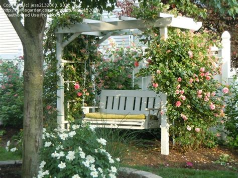 garden arbor swing beginner gardening let s see your arbors and trellises