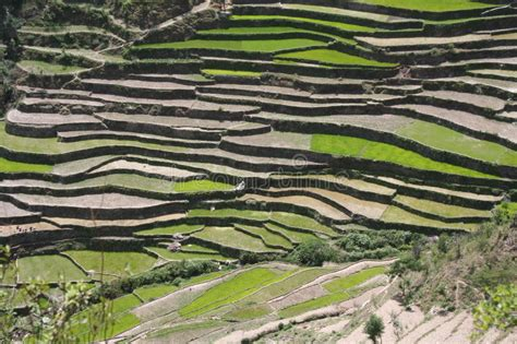 terrace farming in hindi himalayan steppe terrace farming uttaranchal india stock