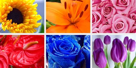the best flowers aren t always the biggest serenity choosing the right colour flowers for your wedding