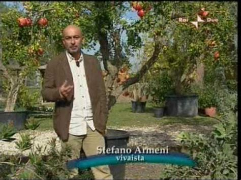 armeni giardini armeni giardini piante di melograno