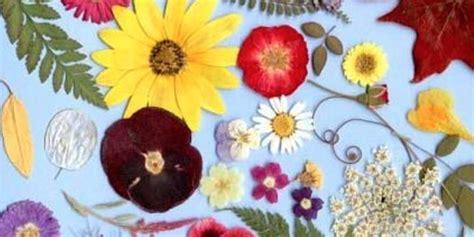 come assumere i fiori di bach posso assumere valeriana e fiori di bach insieme
