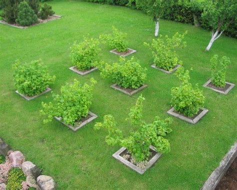 backyard orchard design pinterest