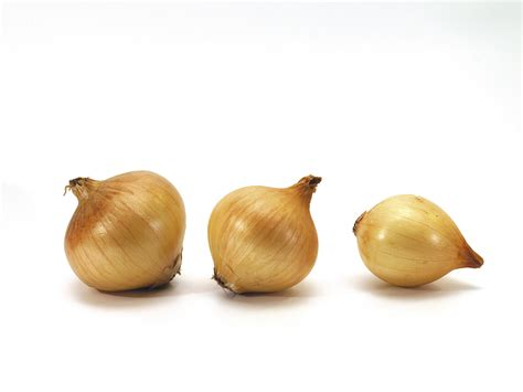 onion daughter file three onions on white background jpg wikimedia commons