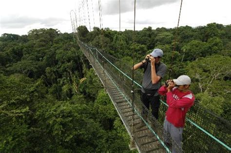 canopy amazon canopy amazon amazon nature tours paragon jungle tours in the amazon rainforest of ecuador foto in