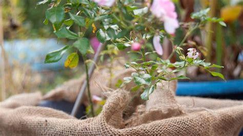 Garten Winterfest Machen Checkliste by Garten Winterfest Machen Checkliste Und Tipps Sat 1