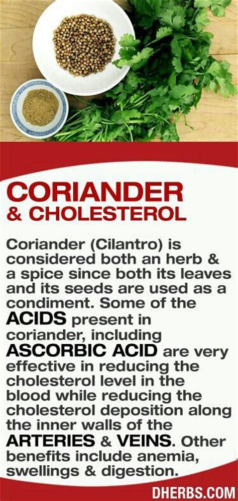 Side Effects Of Cilantro Detox by 17 Best Images About Home Solutions On Flu