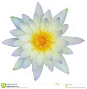 Lotus Vs Water Water Or Lotus Flower Stock Photography Image 31339272