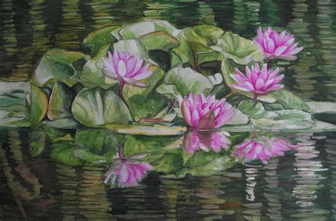 seerosen bilder bild seerosen wasser natur aquarellmalerei