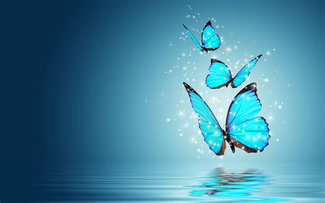 blue butterfly water reflection wallpaper