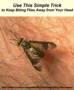 keep flies away on flies away pine sol and