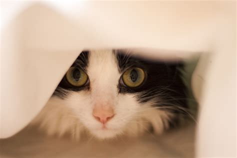 new cat hiding under bed free stock photo 3202 cat in bed freeimageslive