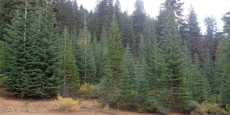 silvertip tree farm