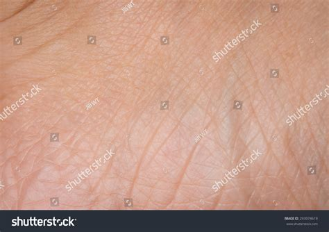 up human skin macro epidermis stock photo image of anatomy freckles 36429390 up human skin texture macro stock photo 293974619