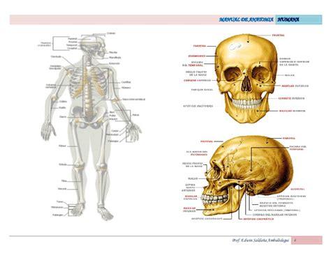 imagenes netter pdf atlas de anatomia humana netter pdf free