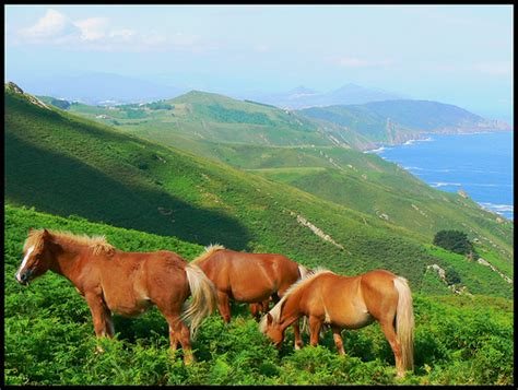 imagenes de animales y paisajes paisaje con animal y paisaje imagui