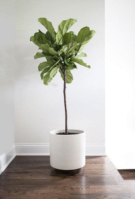 plant home 17 best ideas about house plants on pinterest plants