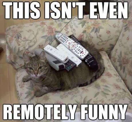 Stupid Cat Meme - friday favorites 104 week of 8 28 life in leggings