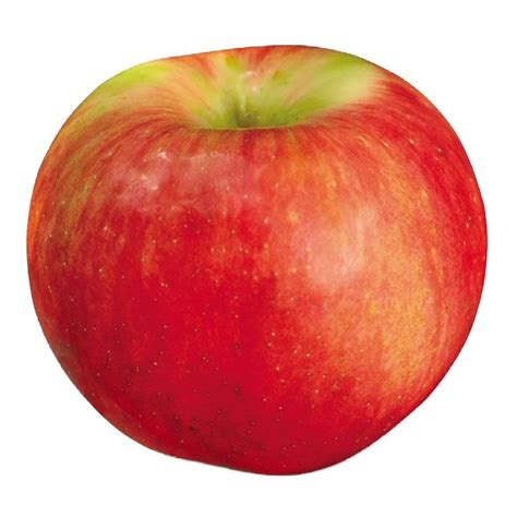 green apple great english 8853004231 different types of apples with photos