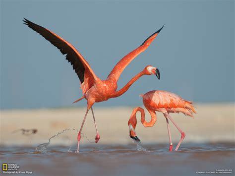 flamingo wallpaper images flamingos images flamingo hd wallpaper and background