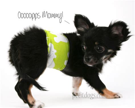belly band for dogs belly band for dogs stop marking green hippos pet it apparel