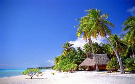 palm tree landscape landscape with palm tree www imgkid the