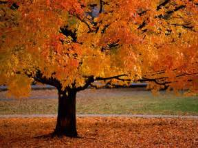 changing colors autumn reinventing the we ll