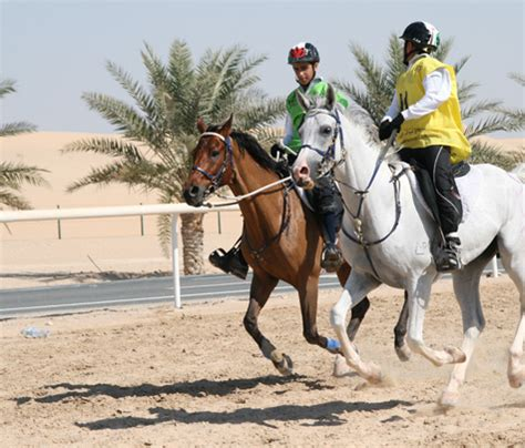 Ah Hoy Ride A Pony Theitlistscom by Al Ahli Or Horsemanship Lessons
