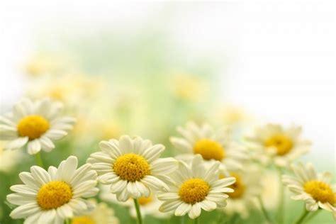 immagini fiori primaverili 7 fiori primaverili d appartamento da coltivare pollicegreen