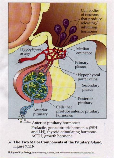 Turner Hormone Detox by Lactotroph Hormone Diet Cookposts