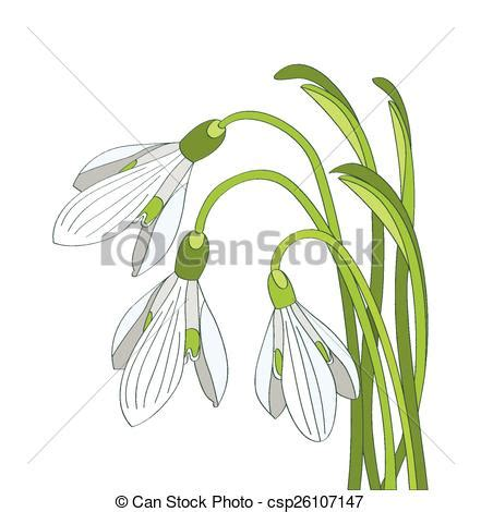bucaneve fiori vettore eps di fiori bucaneve vettore illustrazione