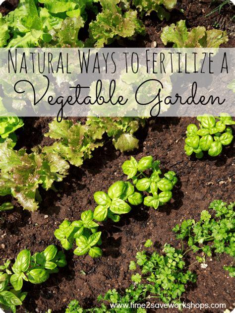 3 ways to fertilize a vegetable garden kasey trenum