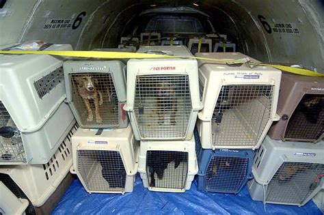 Delta Airlines Pets In Cabin delta will no longer make pets fly as cargo