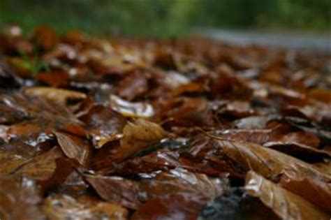 Pflanzen Im Wasser 4491 by Waldboden Bl 228 Tter Der Kostenlosen Fotos