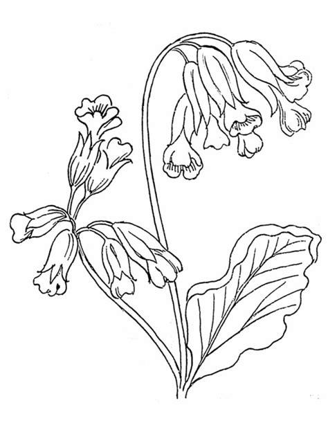 canelle fiori disegni di fiori da stare margherite da colorare