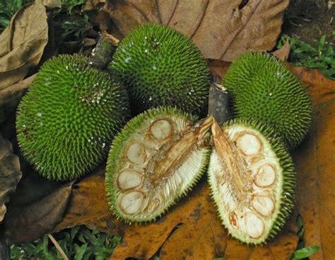 caraka purwo wibisono mengenal manfaat  khasiat buah