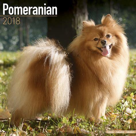 pomeranian calendar pomeranian calendar 2018 pet prints inc