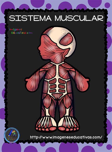 imagenes educativas cuerpo humano el cuerpo humano aparatos y sistemas para primaria 6