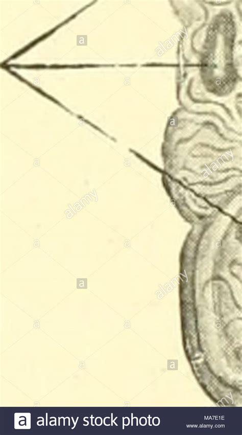 glomerulus stock photos glomerulus stock images alamy - Sofa Für Die Hälfte