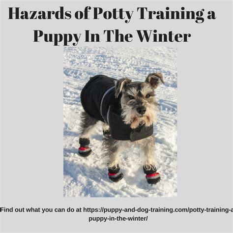 potty puppy in winter hazardsofpottytraininginthewinter puppy and