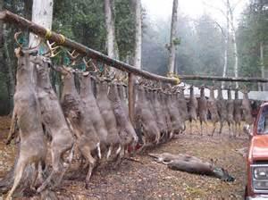 Pole a chevreuil impressionnante click for details deer skinning pole