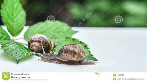 Dust Snail Green snails royalty free stock photo cartoondealer 44022099