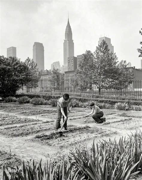june   york school victory garden
