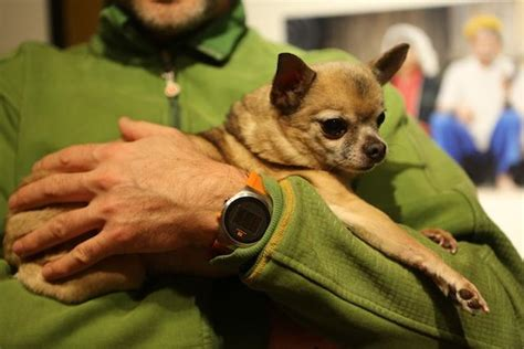 how do dogs carry puppies how to carry your small without hurting them i dr dobias